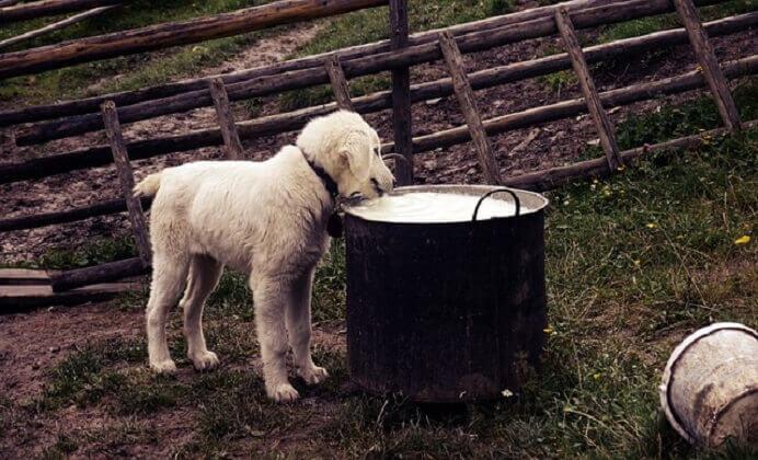 ¿las sobras de comida afectan la Salud del perro?
