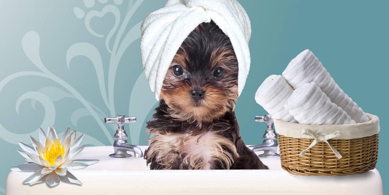 ¿Spa para perros?. El lujo para perros está de moda