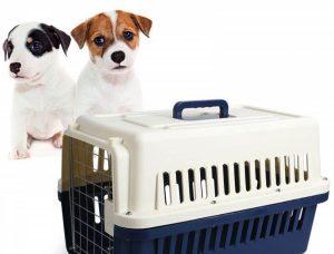 adiestrar perro transportin
