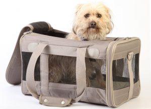 transportin para viajar con tu perro