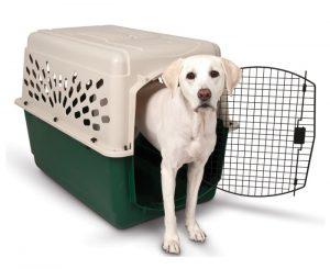 transportin perro grande