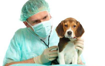 ¿Harías la Cirujía Estética a tu perro? (Ellos si lo hicieron)