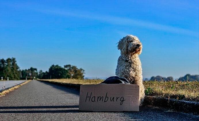 ¿Vas a viajar con tu perro? Mira estas sugerencias