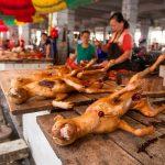 Prohibido el Festival de Carne de Perro de Yulin [por fin lo hemos conseguido…]